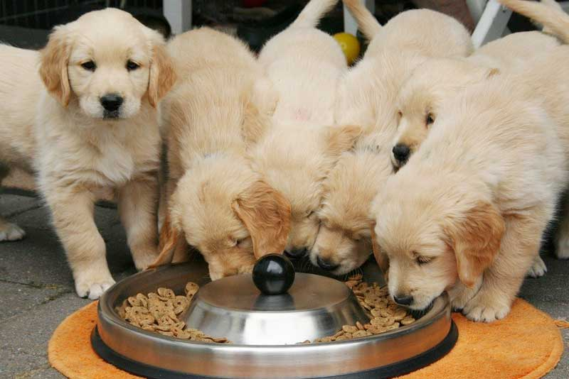 A Complete Guide on Pet Food